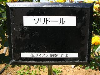 yono-bara100516-204