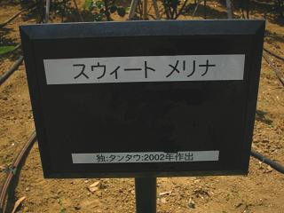 yono-bara100516-208