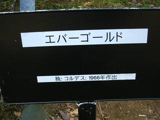 yono-bara100516-210