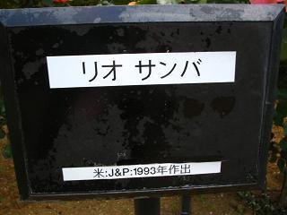 yono-bara100516-220