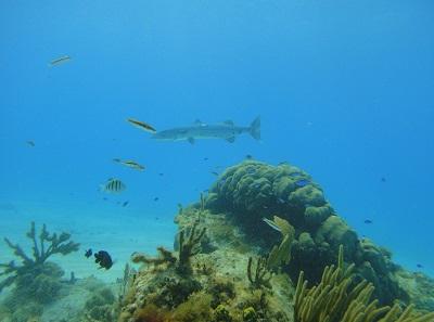 diving_002.jpg