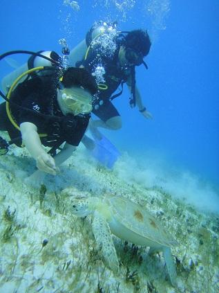 diving_004.jpg