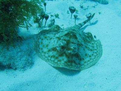 diving_005.jpg