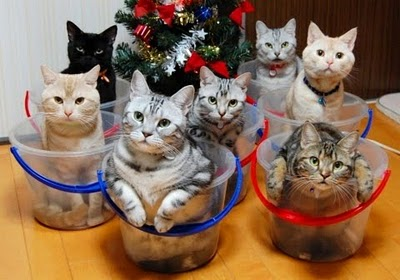 image_1_RE_How_to_store_and_organize_cats-s400x280-42087.jpg