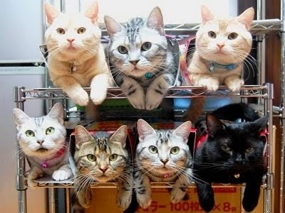 image_3_RE_How_to_store_and_organize_cats-s400x300-42085.jpg