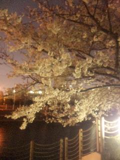地元の夜桜