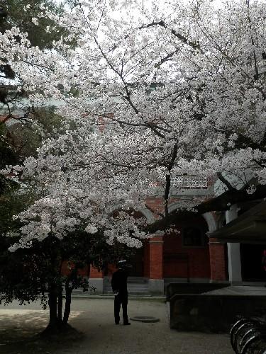術科学校桜