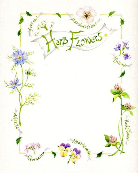 Herb Flowes