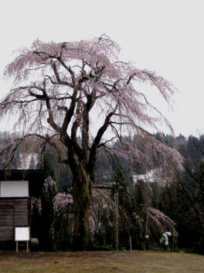 栗山沢20100429b