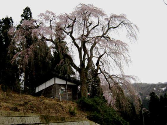 栗山沢20100429a