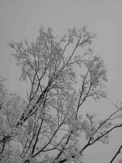 雪景色110115d