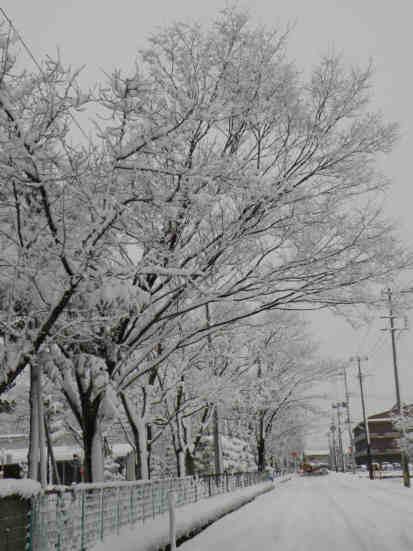冬景色110115c