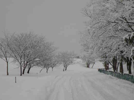 冬景色110115b