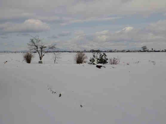 雪景色110118b