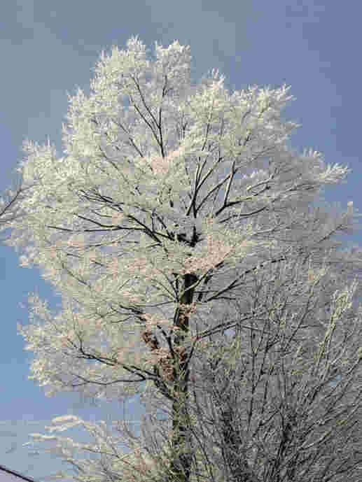 雪の花110309b