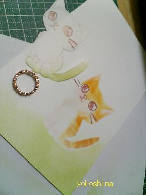 ケシ 猫顔4
