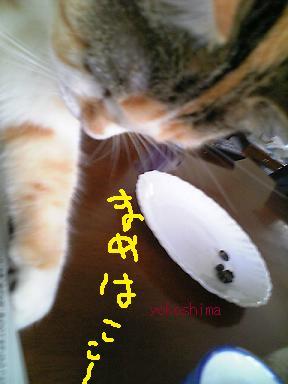 写真 ミューちょい1