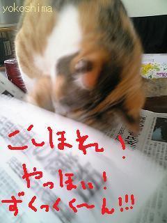 写真 ミューちょい5