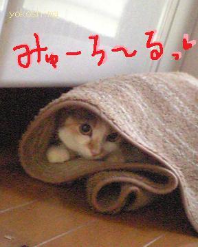 ミューロール☆