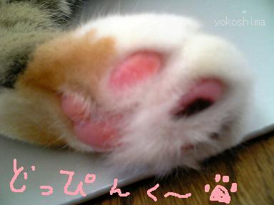 ミュー 肉球ピンク