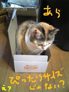 ミュー 箱ギュ1