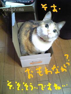 ミュー 箱ギュ2