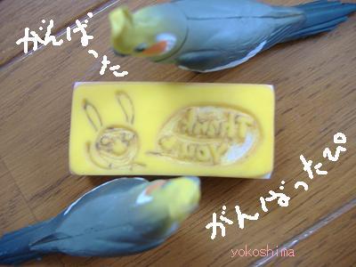 ウサギ サンキュー続