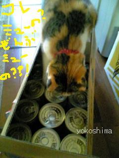 ミュー 初売り缶