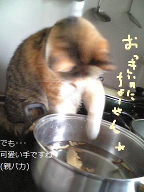 ミュー 鍋4