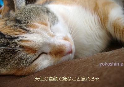 ミュー 天使の寝顔