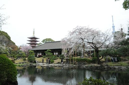 浅草寺の桜2