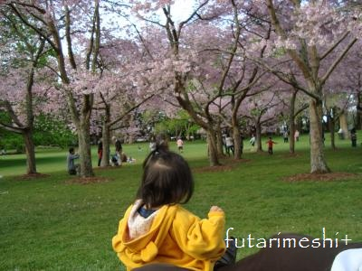 sakura @cornwall park 2012