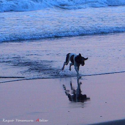 犬P1011413