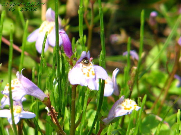 0690紫の花110520
