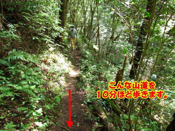 3567鈴木の滝歩く道140831