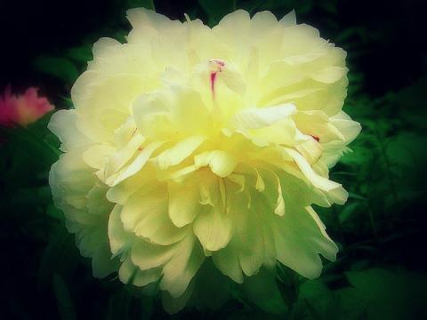 君のいた庭白い花