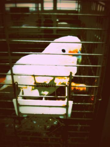 籠の中の白い鳥