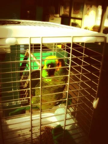 籠の中の緑の鳥