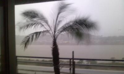台風とヤシの木1