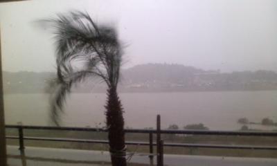 台風とヤシの木2