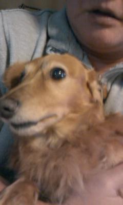 パン泥の犬