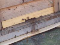 H220222ミツバチ飛び出す.jpg