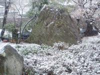 H220228春の淡雪.jpg