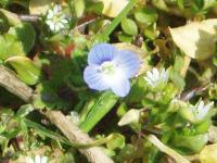 H220228春の草花.jpg