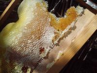 H220305巣枠のハチミツ.jpg