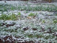 H220329雪の畑.jpg