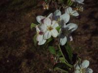 H220503秋映の花