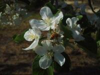 H220503フジの花
