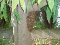 H220506出戻りハチ