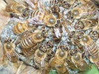 H220510女王蜂の不幸